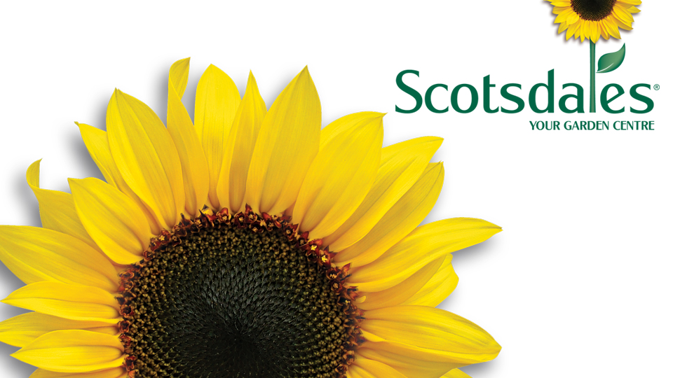 Scotsdales Garden Centre sunflower logo